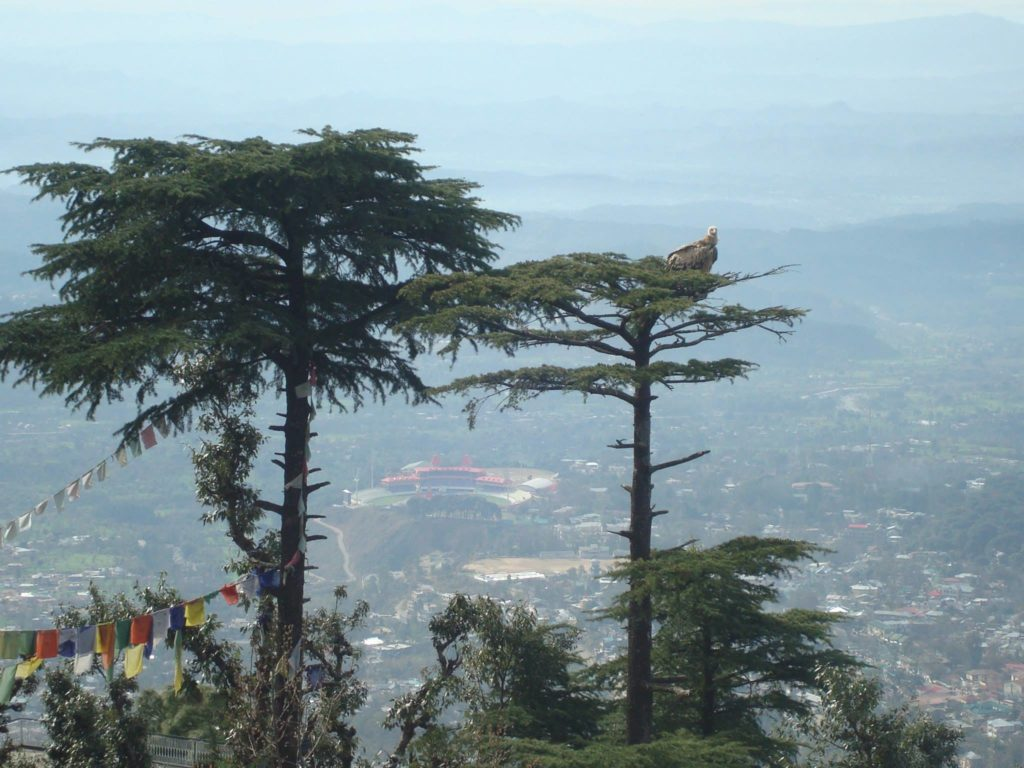 The view of Dharamsala from Kora House. Here, you can catch a glimpse of the the famous cricket ground between the two trees.